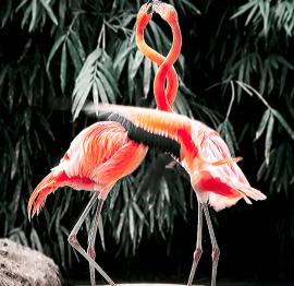 Flamingo Spirit Animal Message