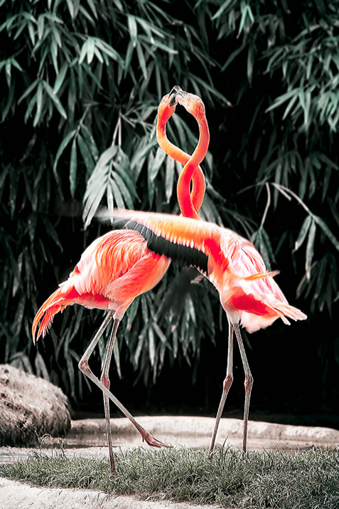 Spirit Animal Flamingo